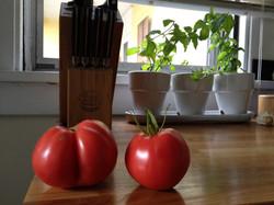 Ripe Tomatoes & Herbs