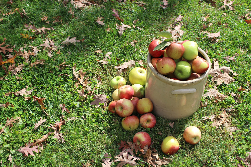 2 Pecks of Apples