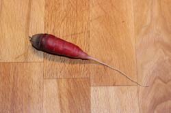 Tiny Dragon's Blood Carrot