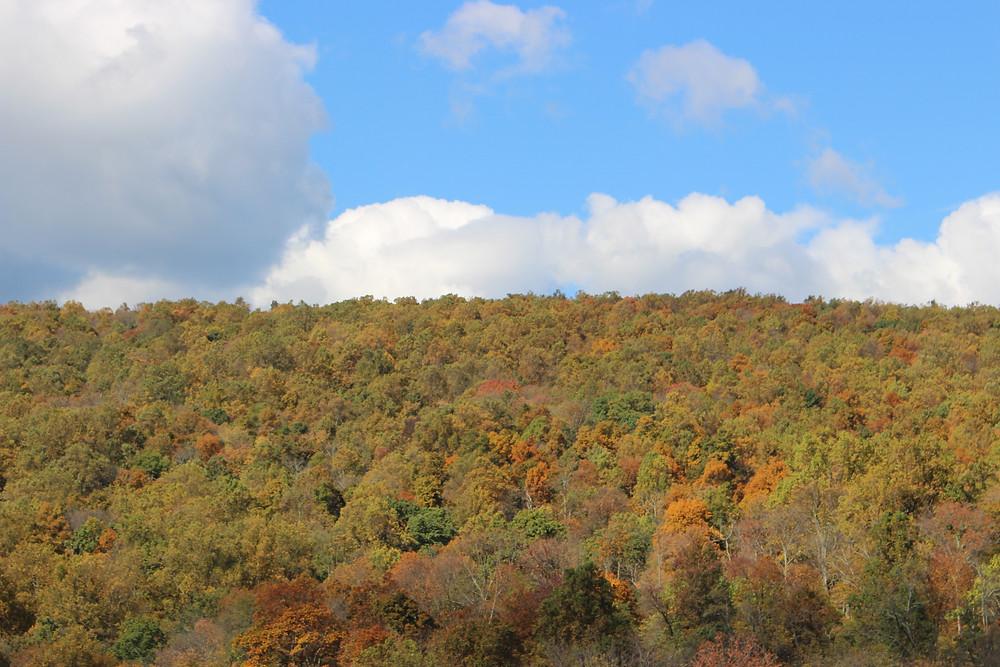 Fall Foliage, Piedmont of Blue Ridge Mountains