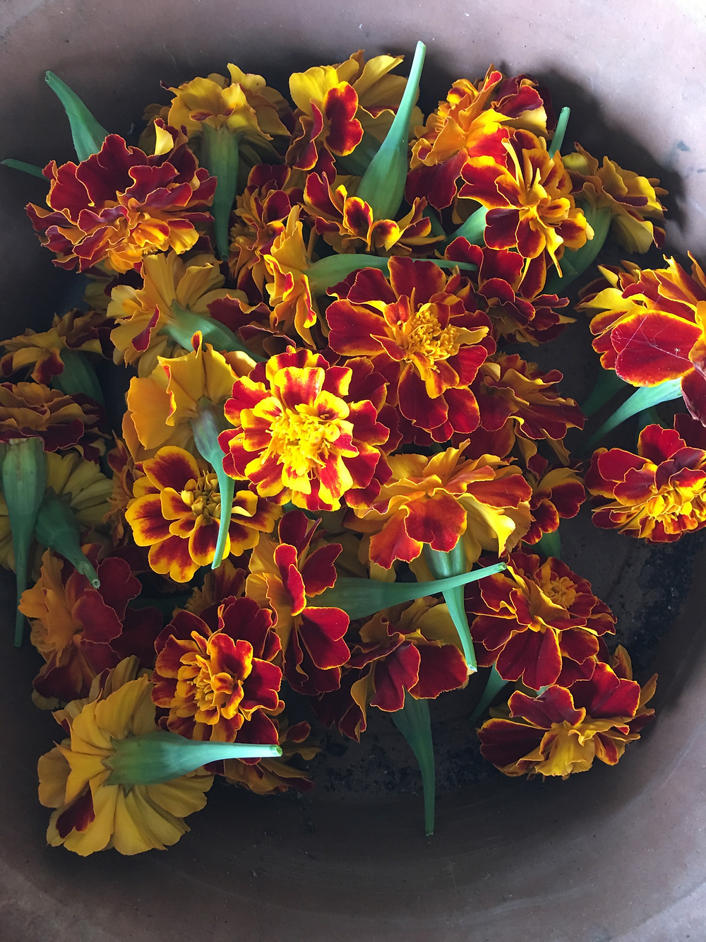 Marigolds Ready for Garland
