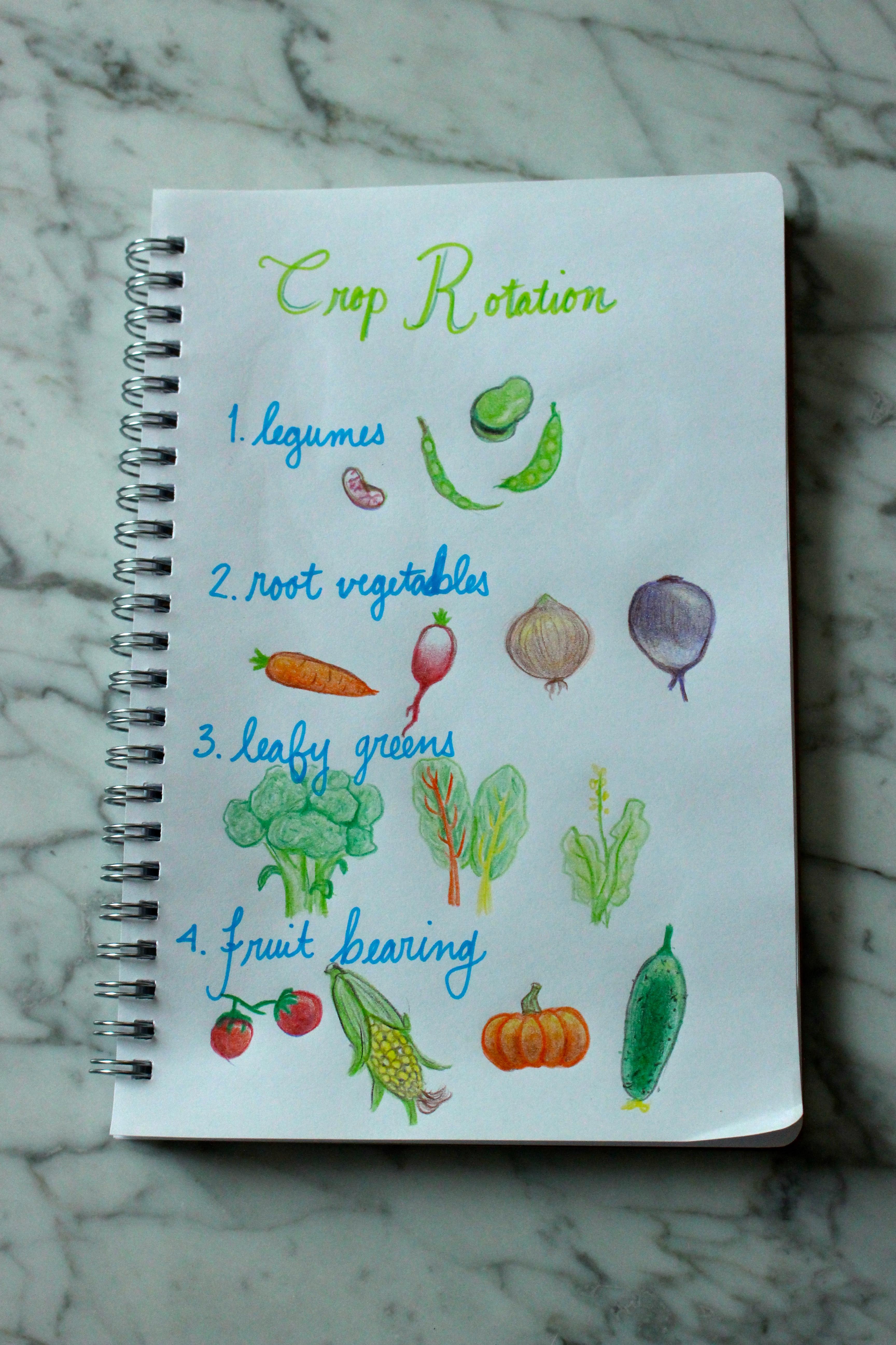 Crop Rotation: Veggie Families