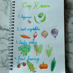 Gardening Planning - Part II: Companion Planting & Crop Rotation