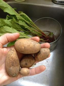 Seeded Potatoes