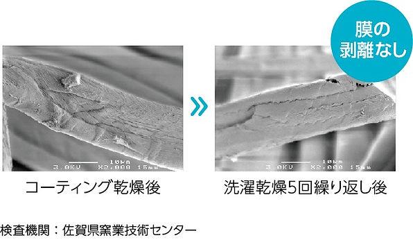 taikyusei_edited.jpg