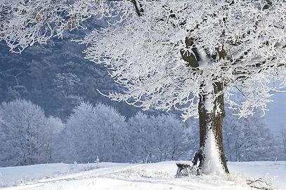 winter-4680354_1920.jpg