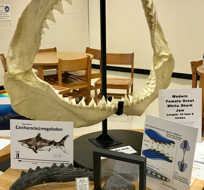 Lauer Foundation PSE focuses on paleontology and geology education through interactive programs
