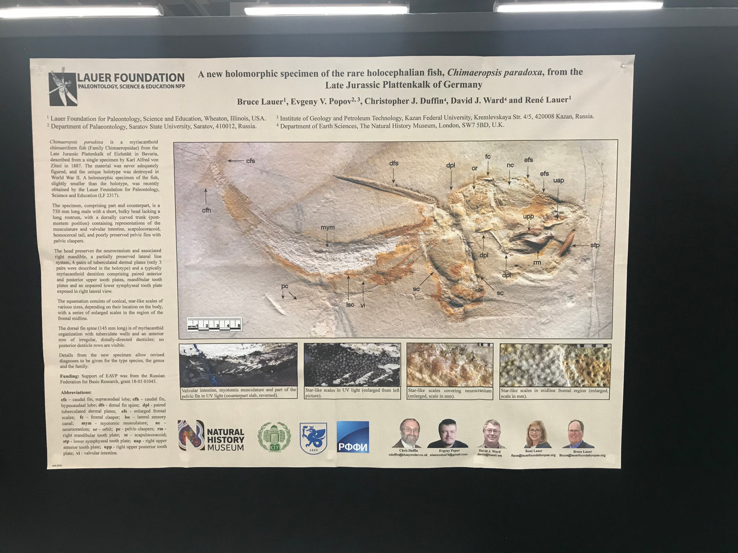 Lauer Foundation Co-authored Poster at SVP 2018