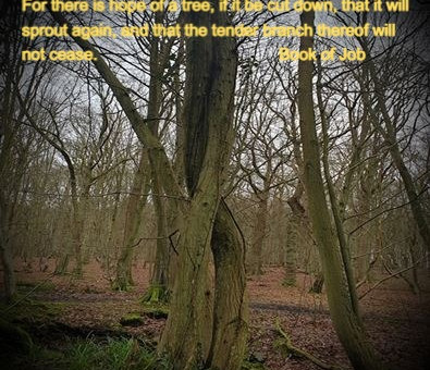 Some thoughts on trees... and grieving