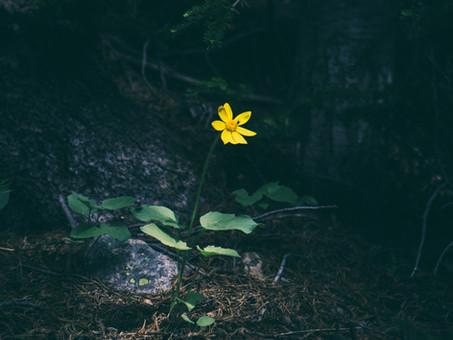 Big or small, trauma still matters