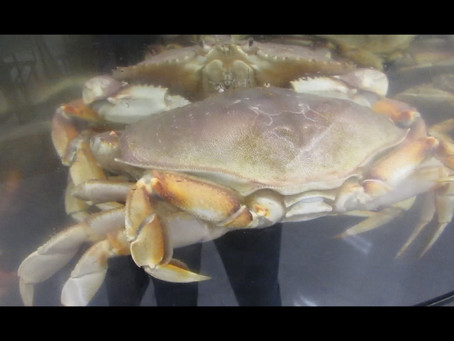 Take a moment ...Feeling crabby?