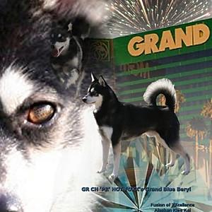 GRCH 'PR' HOT FOXX'S GRAND BLUE BERYL
