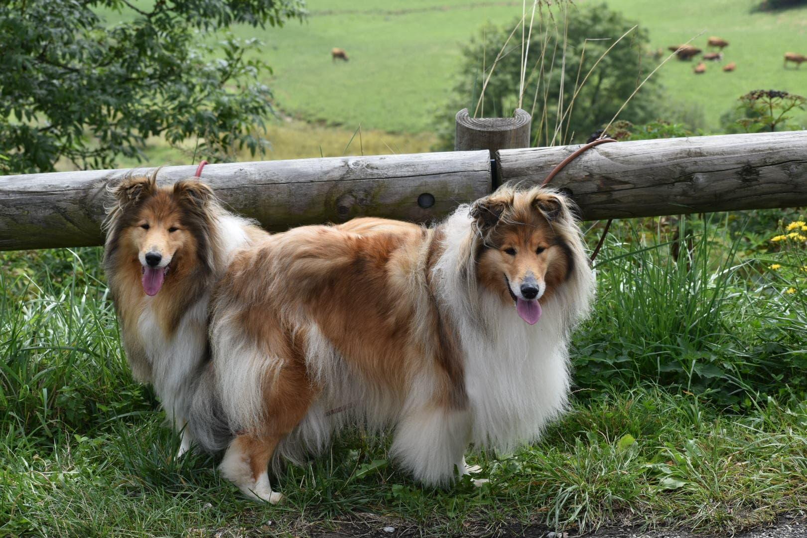 Margotte et Laika