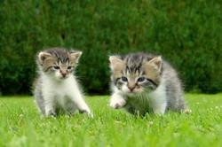 Lili  recueille 2 chatons abandonnés