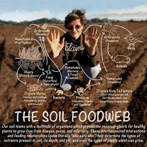 A new film: The Soil Food Web