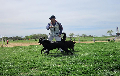 adiestramiento canino instructor DonCan