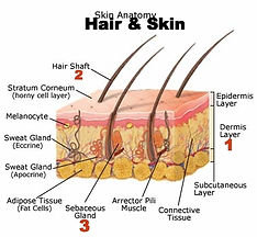 Hair and skin layers