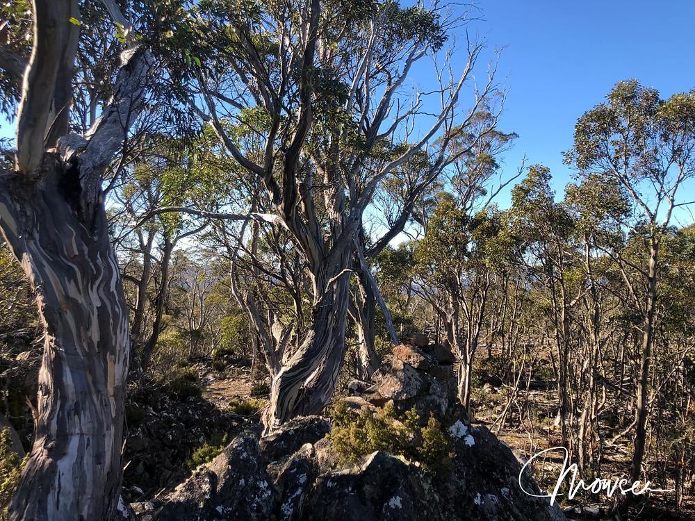 Summit of Mt Patrick, Arthurs Lake Tasmania