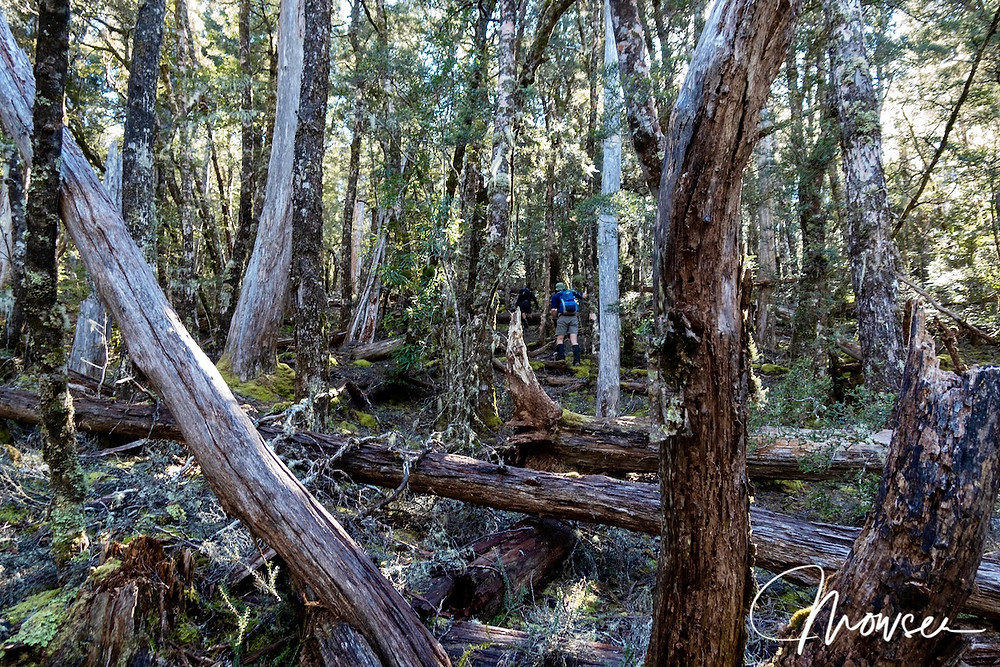 Forest below Wentworth Hills