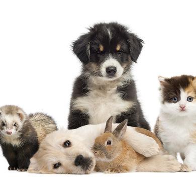 Alle lieben Tierärztin Dr.Silke Mehlhose-Koch