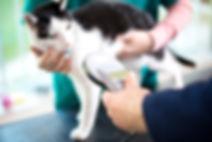 Kleintierpraxis Dr.Silke Mehlhose-Koch / Tierkennzeichnung