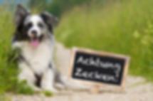 Kleintierpraxis Dr.Silke Mehlhose-Koch / Zeckenschutz