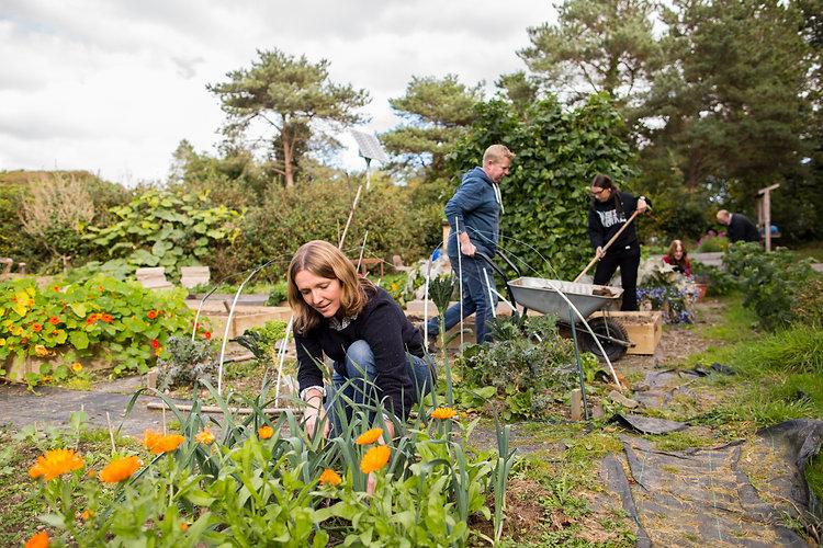 garden_allotment-IMG_2190.jpg