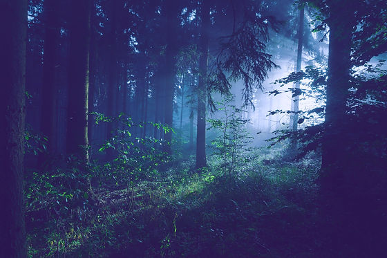 trees on forest with sun rays_edited.jpg