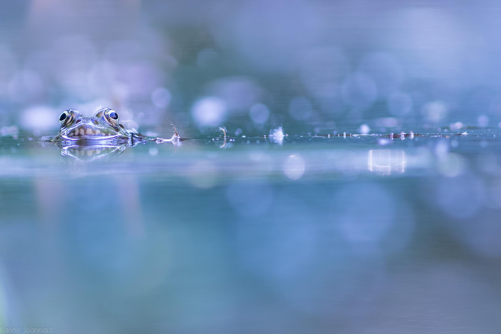 La grenouille de Bashô