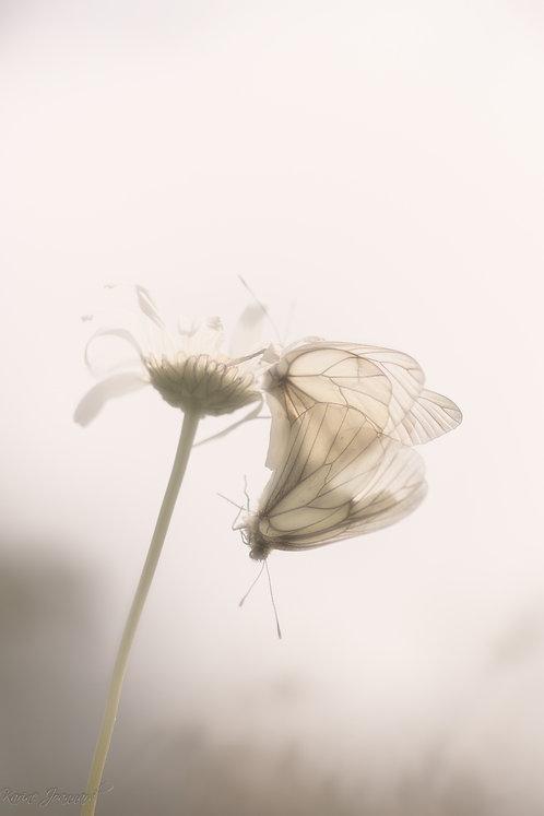 Tirage d'art A5 -  Misty love