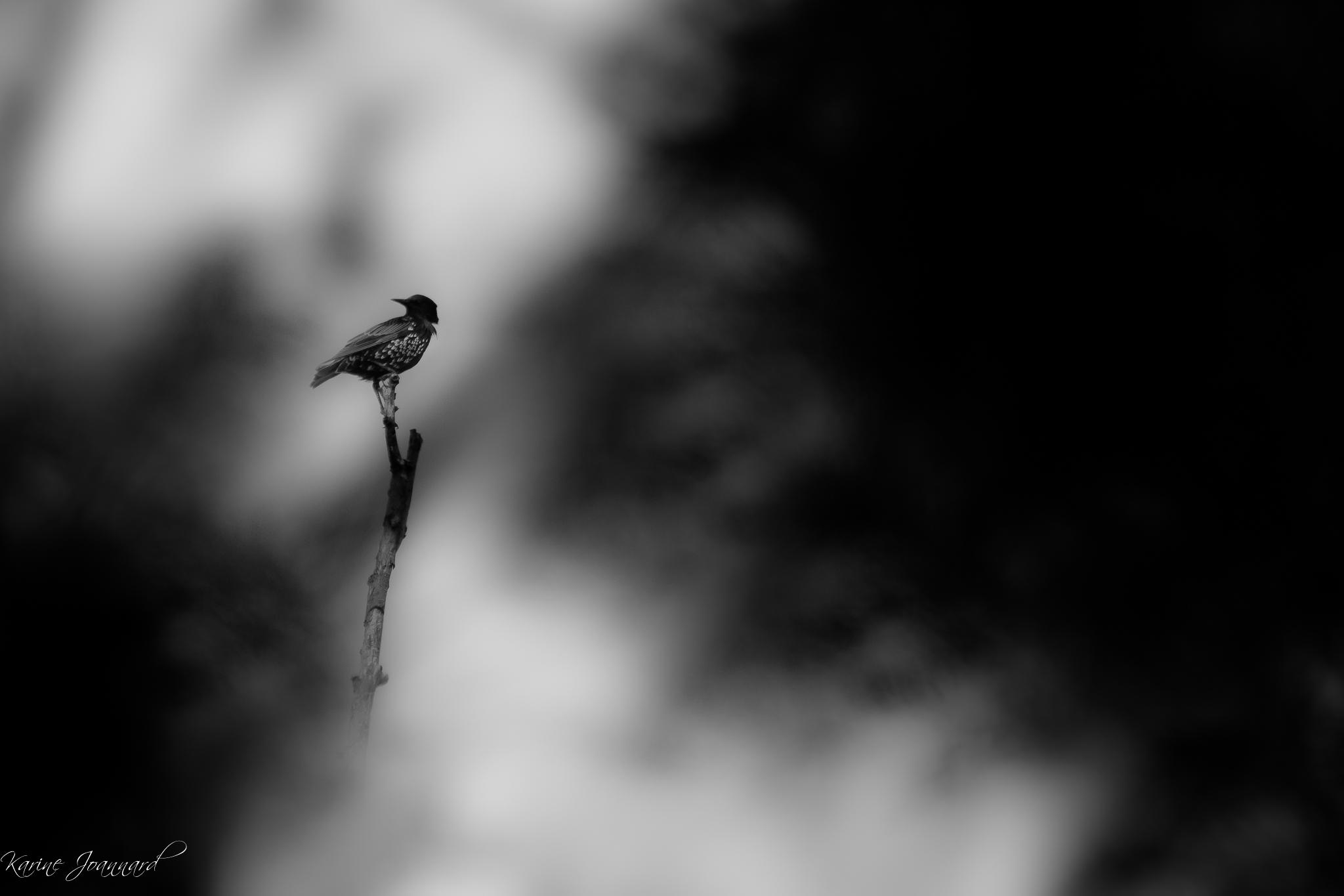 Hitchcok's bird