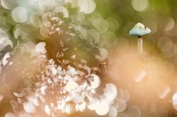 Fairy Vert-de-Gris
