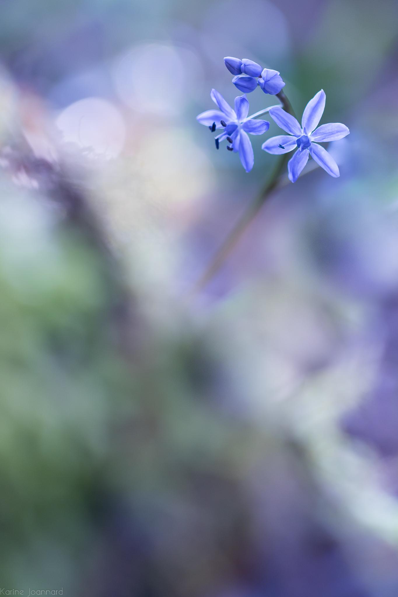 Blue Nova