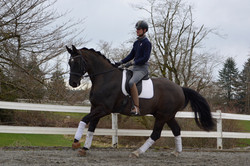 Don Cavallo II