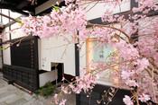 桜2018-1.jpg