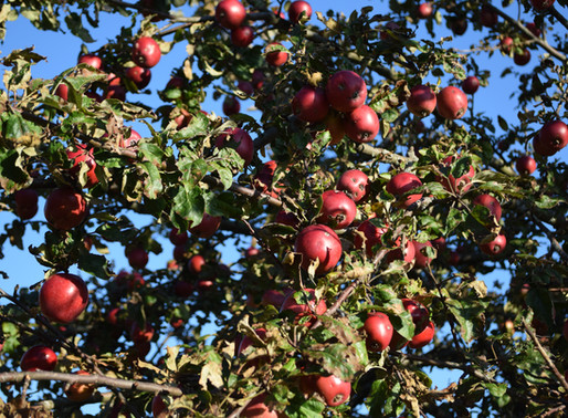 Apples - Chapter 45, 23rd October