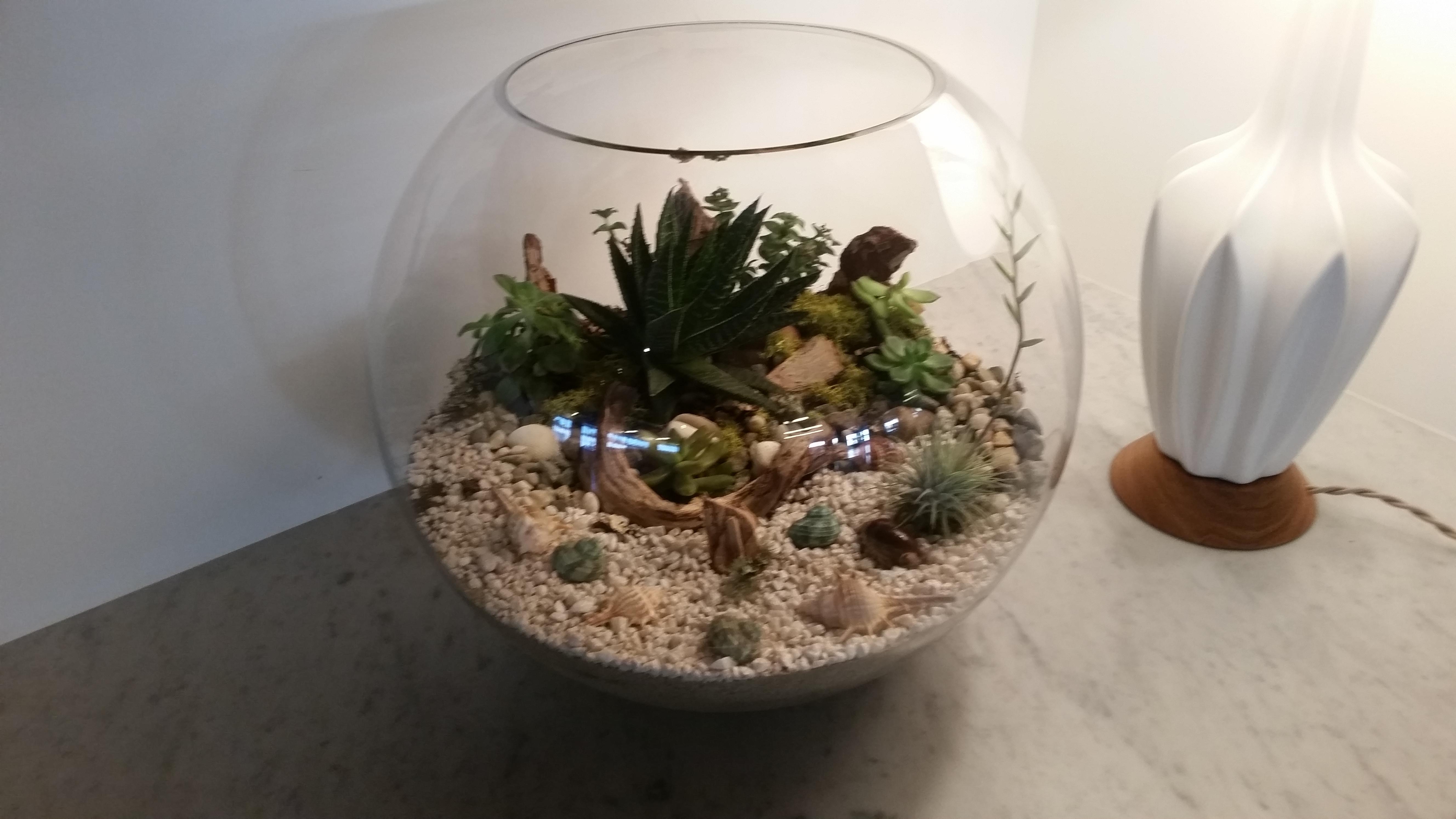 """18"""" terrarium"""