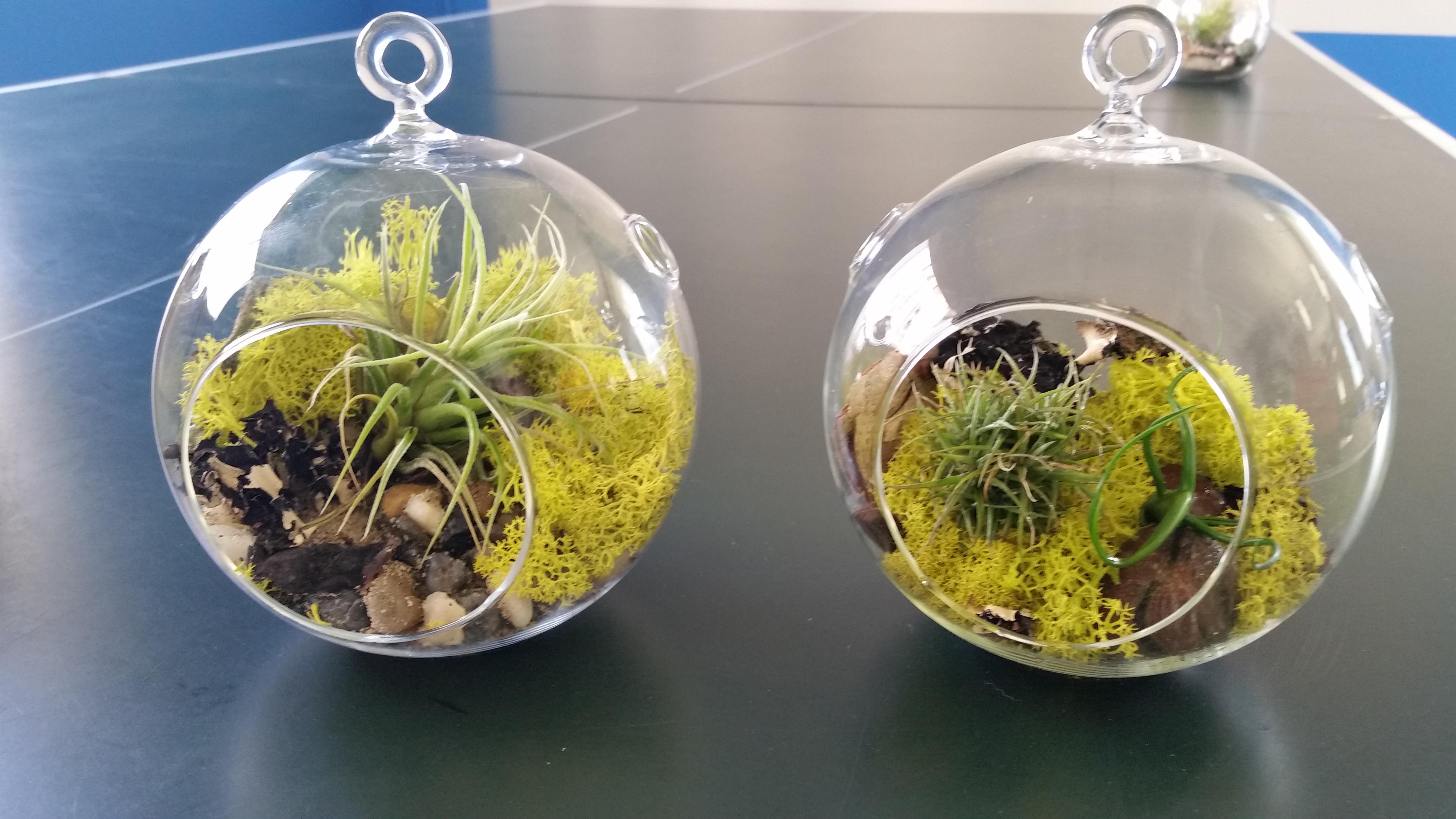 terrarium duo