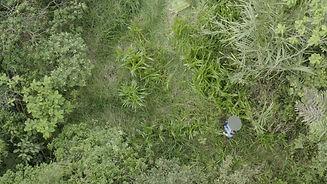 Toma de Drone Juan Pablo Culasso en medio del bosque grabando paisajes sonores