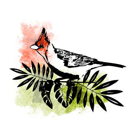 Ilustracion de ave