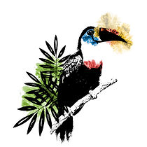 Ilustracion de Tucan, click para Media