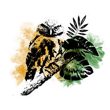 Ilustración de Glaucidium sp. Click para ir al Blog