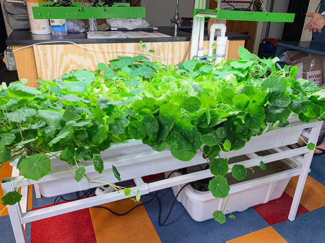 TSH Grow ROom Food on Mars 3IMG_6167.jpg