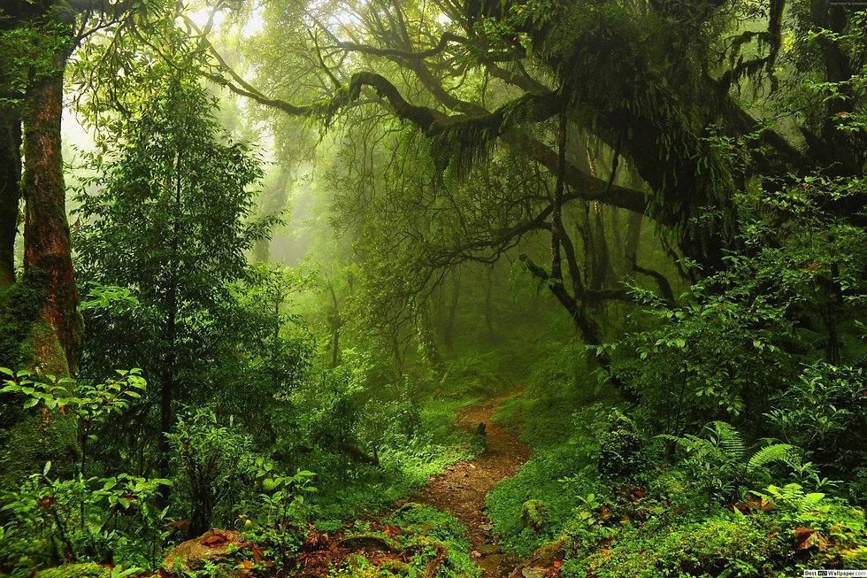 Jungle-large-tree-water-140252.jpg