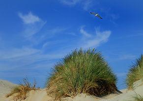 dunes-2199961_1920.jpg