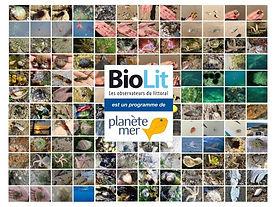 biolit.jpg