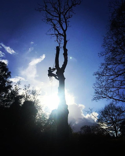 Tree Removal in Amersham