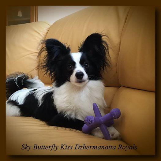 Sky Butterfly Kiss Dzhermanotta Roya