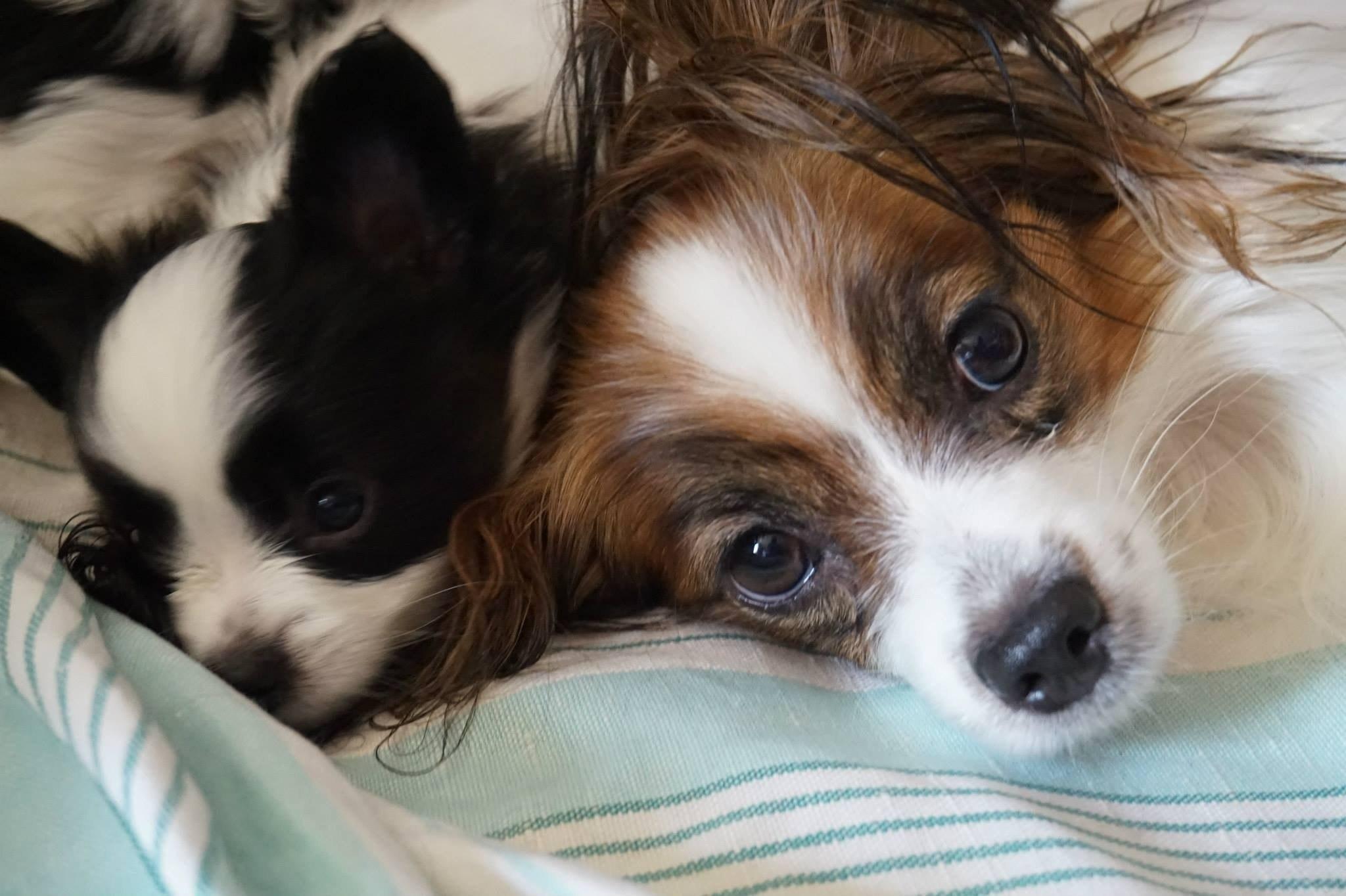Питомник собак в москве