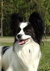 Награда собаки. Чемпион Литвы.